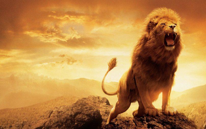 rüyada aslan