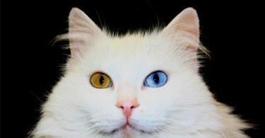 rüyada kedi