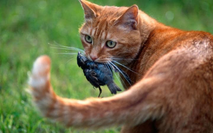 kedi kuş yiyor
