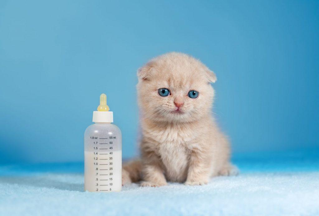 rüyada kedi yavrusu