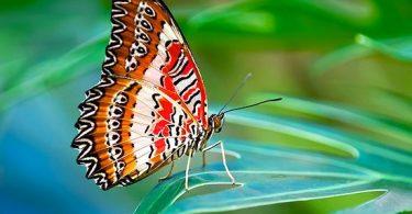 Rüyada Kelebek