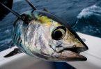 rüyada palamut balığı