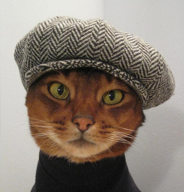 şapka takan kedi