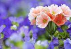 rüyada çiçek