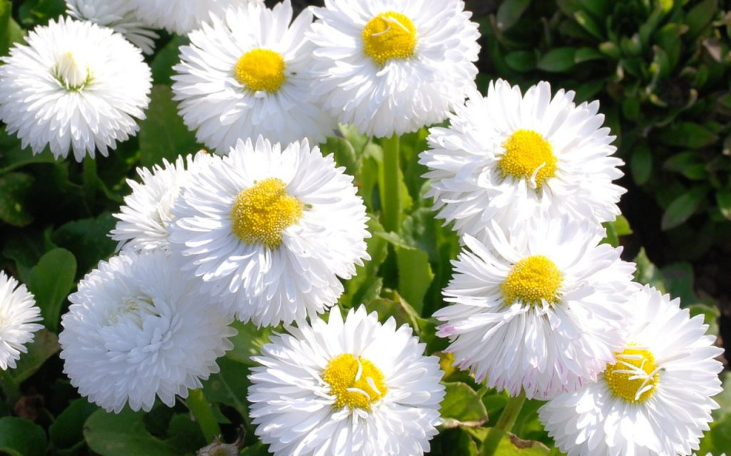 Rüyada çiçek Görmek Rüya Meali
