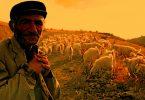 rüyada çoban