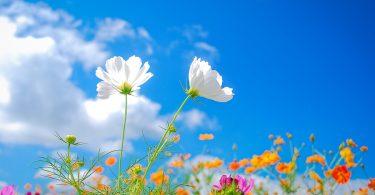 rüyada bahar