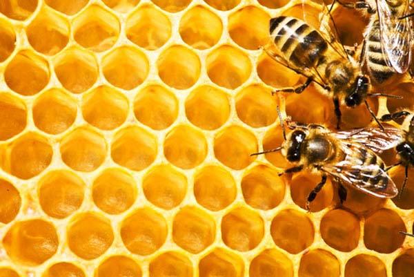 bal ve arı