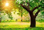 Rüyada Ağaç