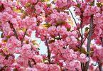 Rüyada Bahar Çiçekleri