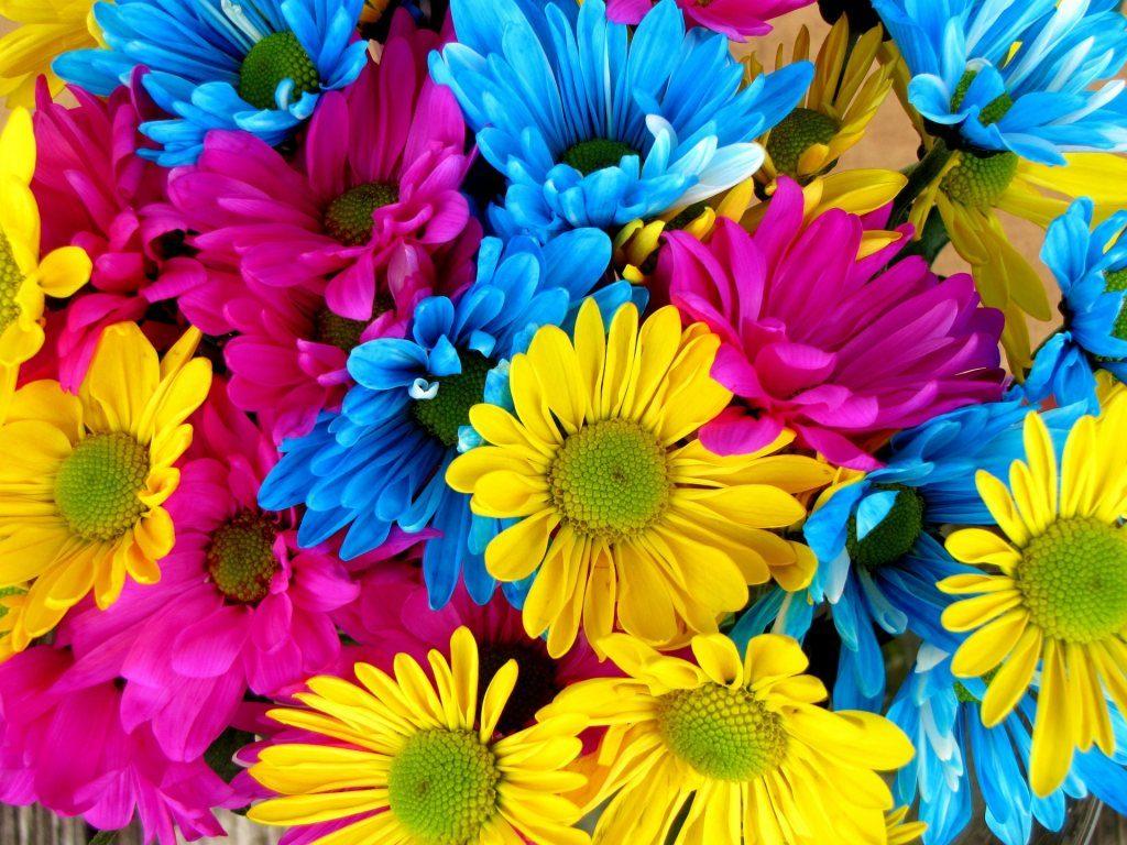 Renkli Çiçek