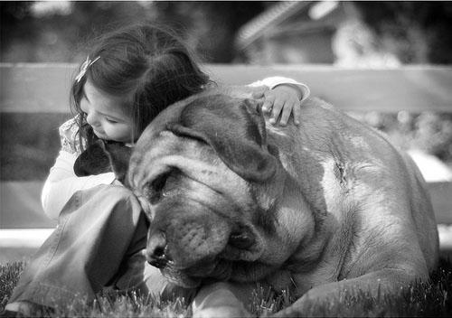 Köpekle Dost Olmak
