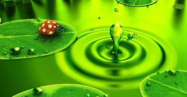 Rüyada Yeşil Renk Görmek