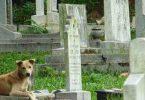 Rüyada Mezarlıkta Köpek Görmek