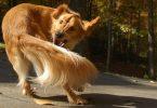 Rüyada Köpeklerin Kovalaması