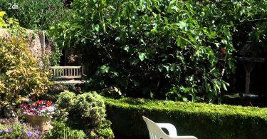 Rüyada incir Bahçesi Görmek