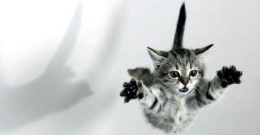 Rüyada Uçan Kedi Görmek