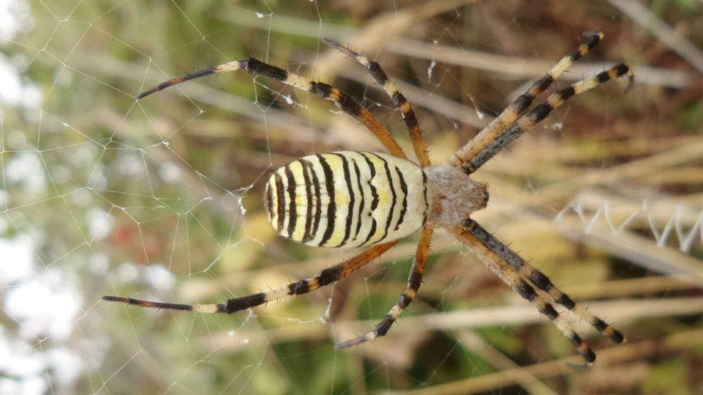 Rüyada Zehirli Örümcek Öldürmek Üzülmek
