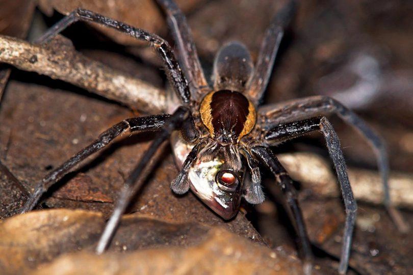 Rüyada Zehirli Örümcek Öldürmek