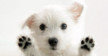 Rüyada Köpekle Oynamak