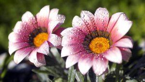 Rüyada Rengarenk Çiçekler Aldığını Görmek