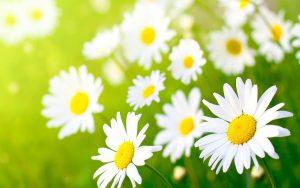 Rüyada rengarenk çiçekler topladığını görmek