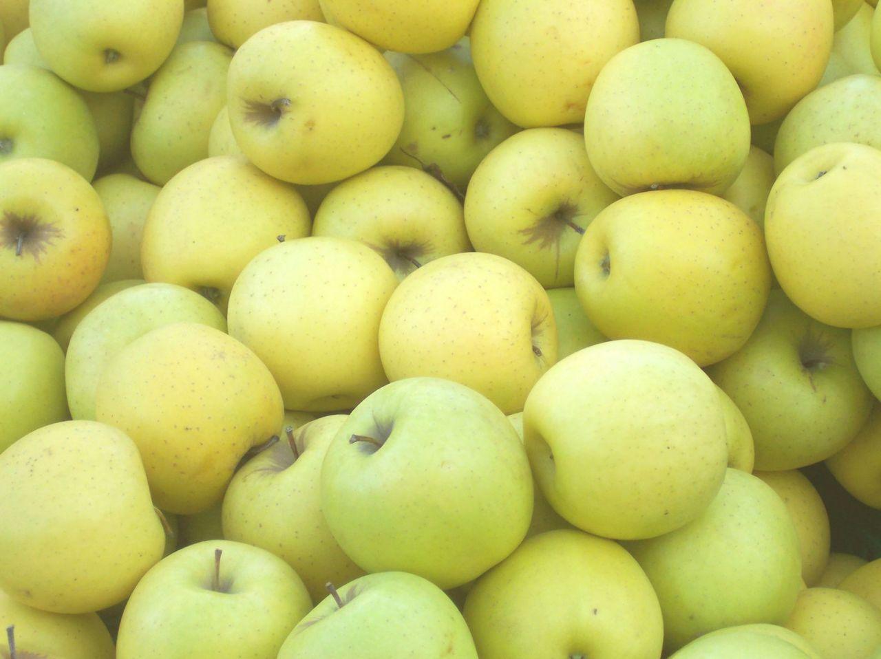 Golden apple software photo captions