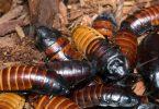 Rüyada Hamam Böceği Öldürmek
