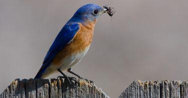Rüyada Mavi Kuşlar Görmek