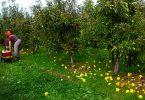 Rüyada Meyve Bahçesi Görmek