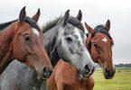 Rüyada At Sürüsü Görmek