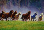 Rüyada Atın Kesildiğini Görmek