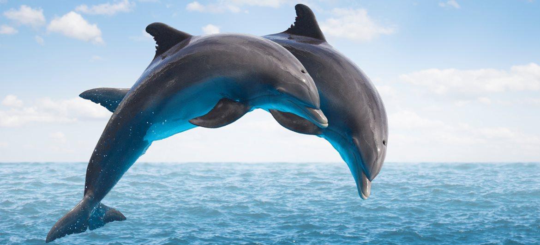 Rüyada Yunus Balığı Tutmak