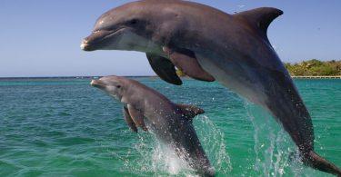 Rüyada İki Tane Yunus Balığı Görmek