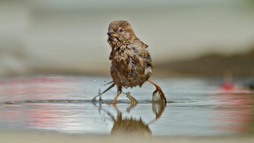 Rüyada Serçe Kuşu Görmek
