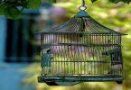 Rüyada Kafes Kuşu Görmek