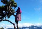 Rüyada Ağaca Tırmanmak