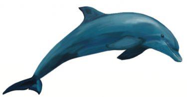 Rüyada Beyaz Yunus Balığı Görmek