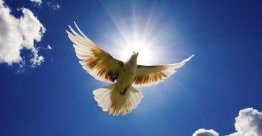 Rüyada Güvercin Beslemek
