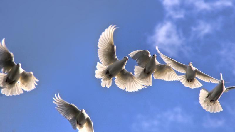 Rüyada Güvercin Vurmak ve Kanadını Kırmak
