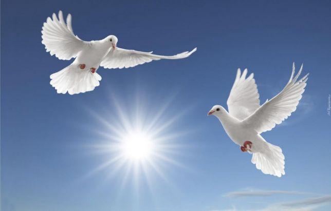 Rüyada Güvercin Vurmak ve Öldürmek