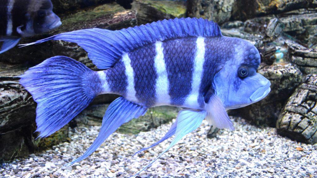 Rüyada Mavi Balık Tutmak