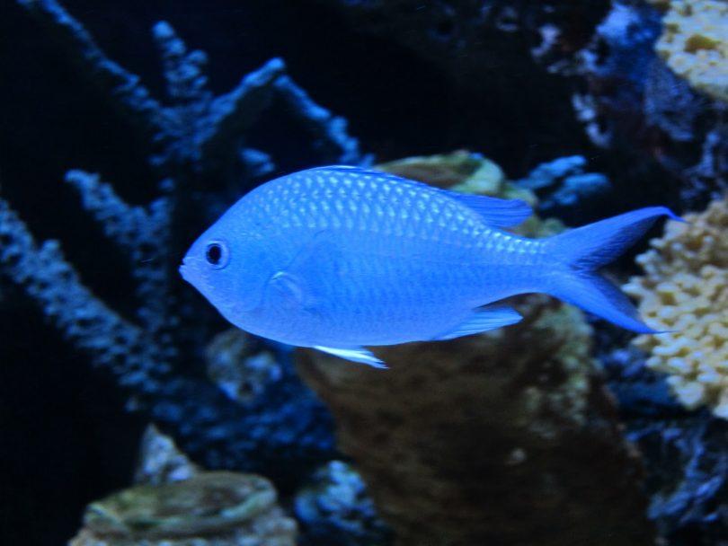 Rüyada Mavi Renkli Balık Görmek