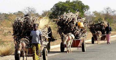 Rüyada Odun Taşımak