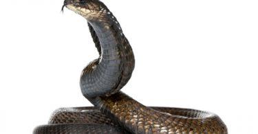 rüyada yılan görmek korkmak