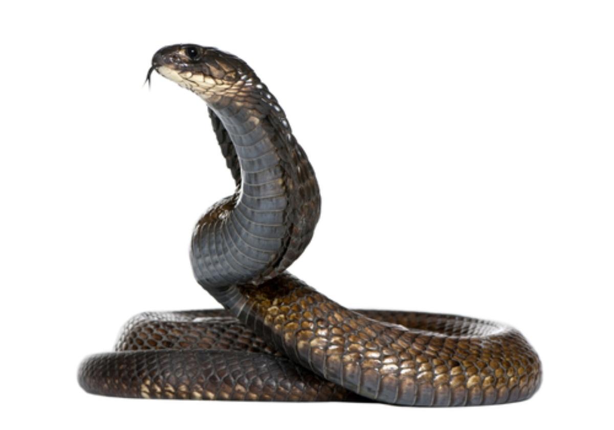Rüyada yılanla boğuşmak ve öldürmek