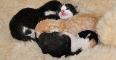 Rüyada Yeni Doğmuş Kedi Yavrusu Görmek