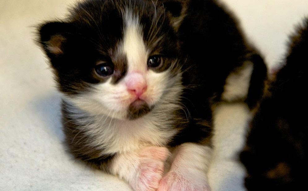 Rüyada Yeni Doğmuş Kedi Yavrusu Görmek ve İlişkiler Hakkında Söyledikleri