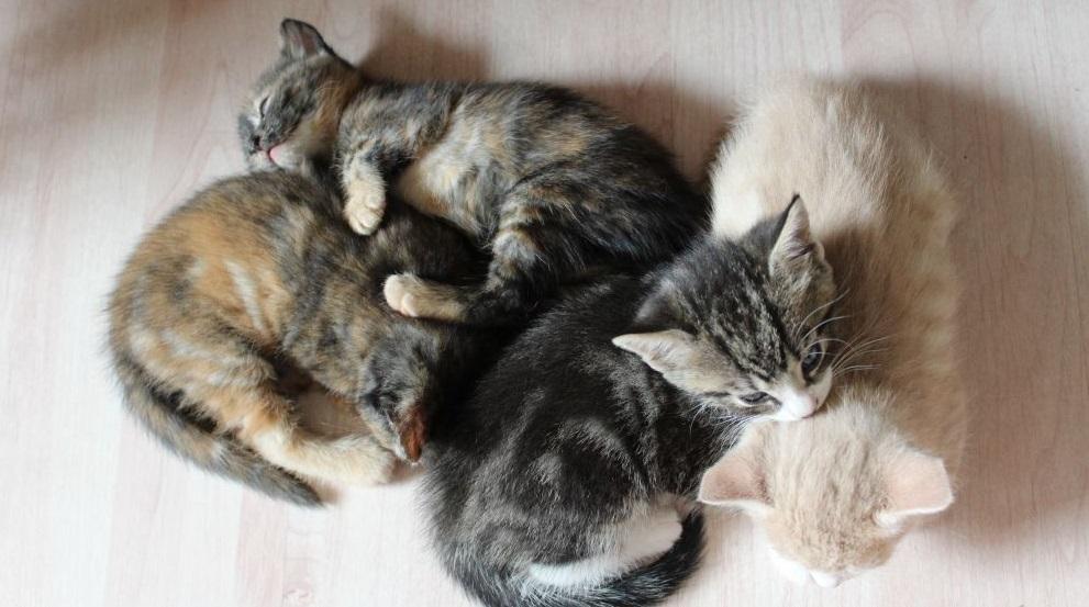 Rüyada Yeni Doğmuş Ölü Kedi Yavrusu Görmek
