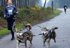 Rüyada köpek kovalamak